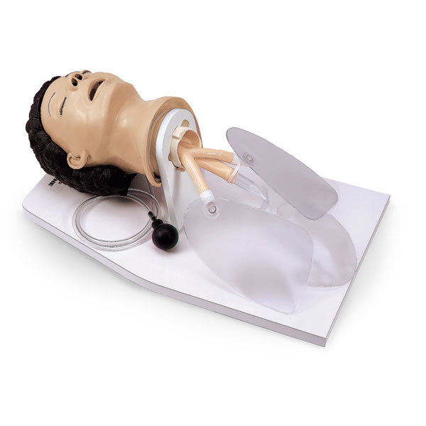 Lifeform Adult Airway Management Trainer with Stand